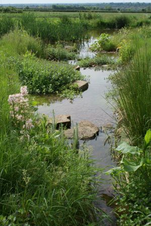 Large naturalistic landscaped pond in Huntingdon, Cambridgeshire