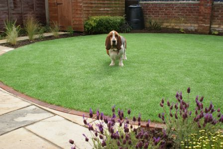 Pet friendly artificial lawn in Ely, Cambridgeshire